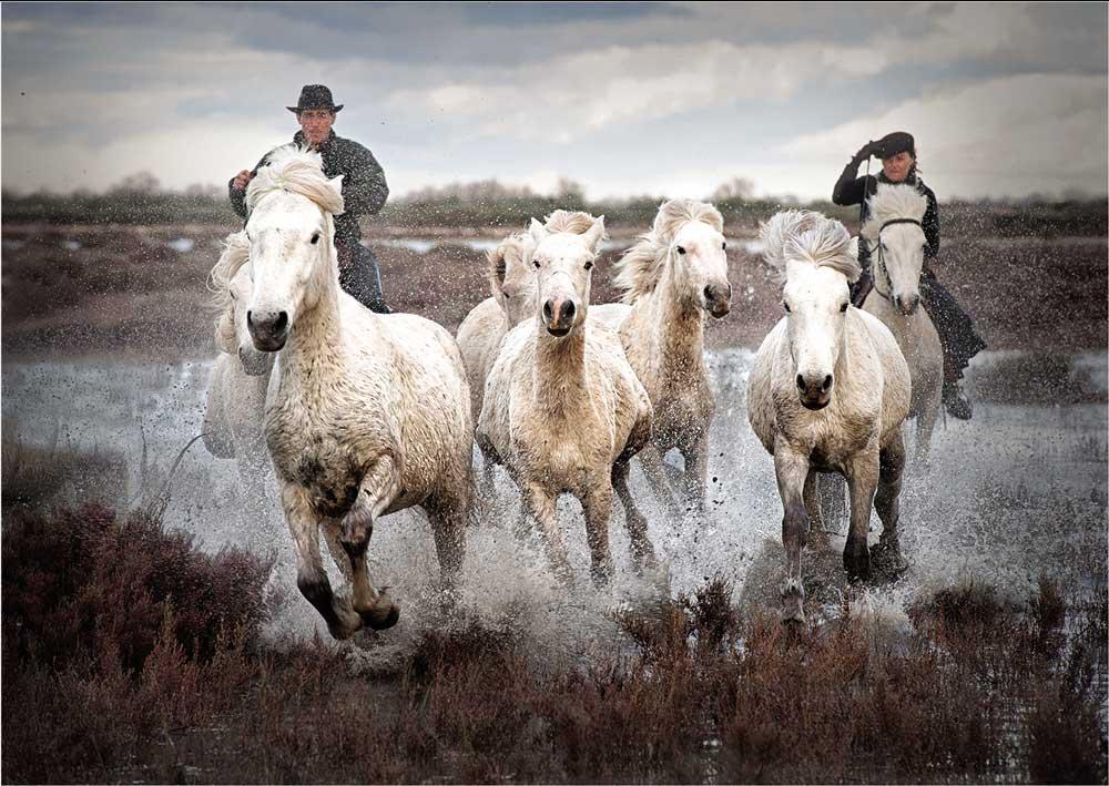 Herding White Horses by Jane Lines