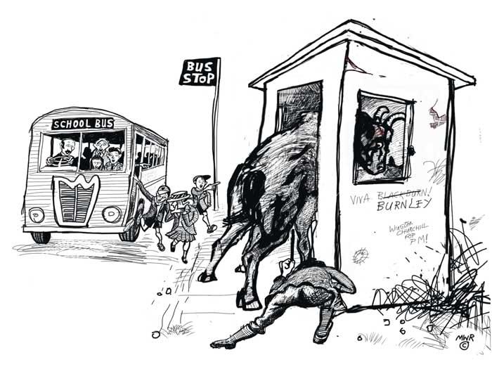 Bull in a Frenzy