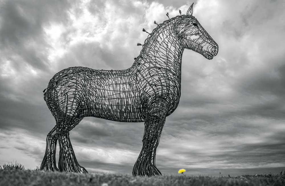 Horse by Peter Redford