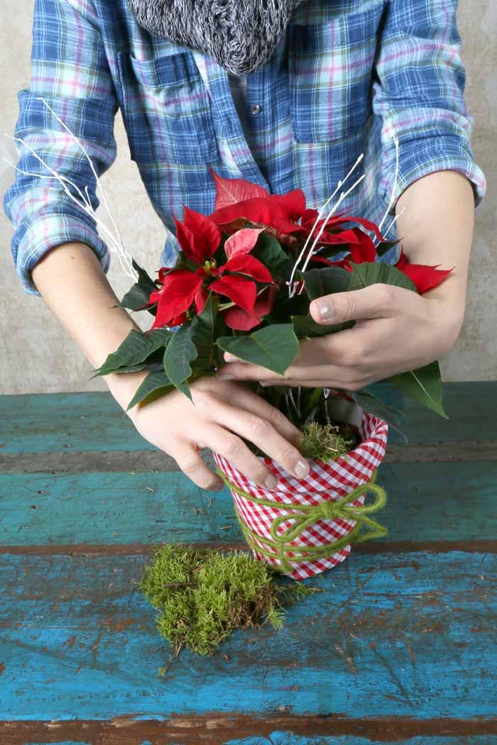 Poinsettia Winter Warmers
