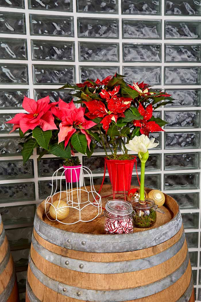 Poinsettia Lovely Lampshade
