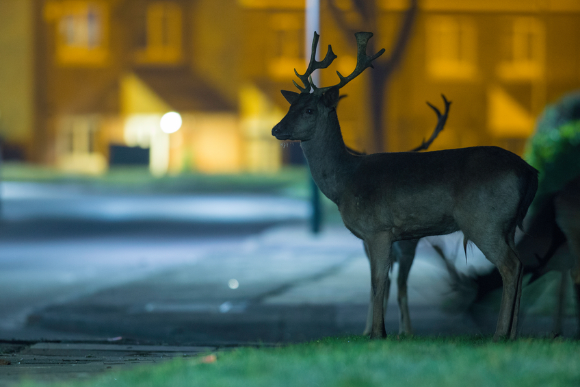 Deer Initiative