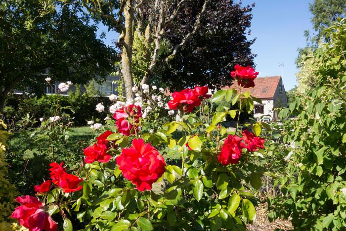 Rose scented garden