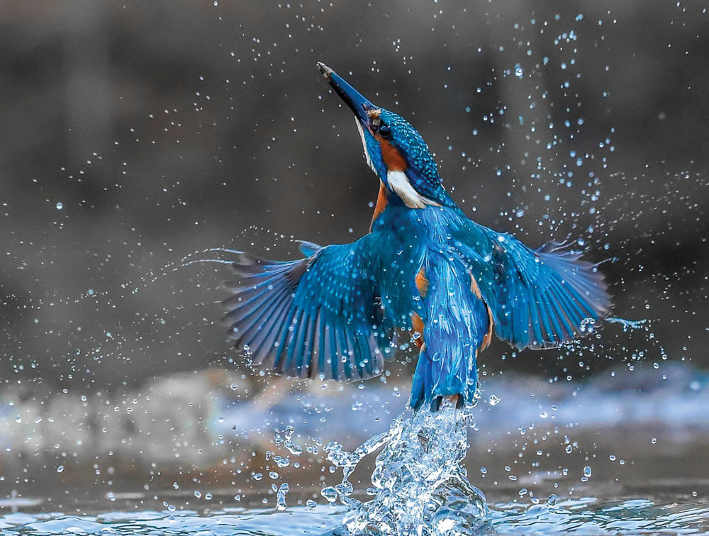 Kingfisher, Stephen Root from Burnley