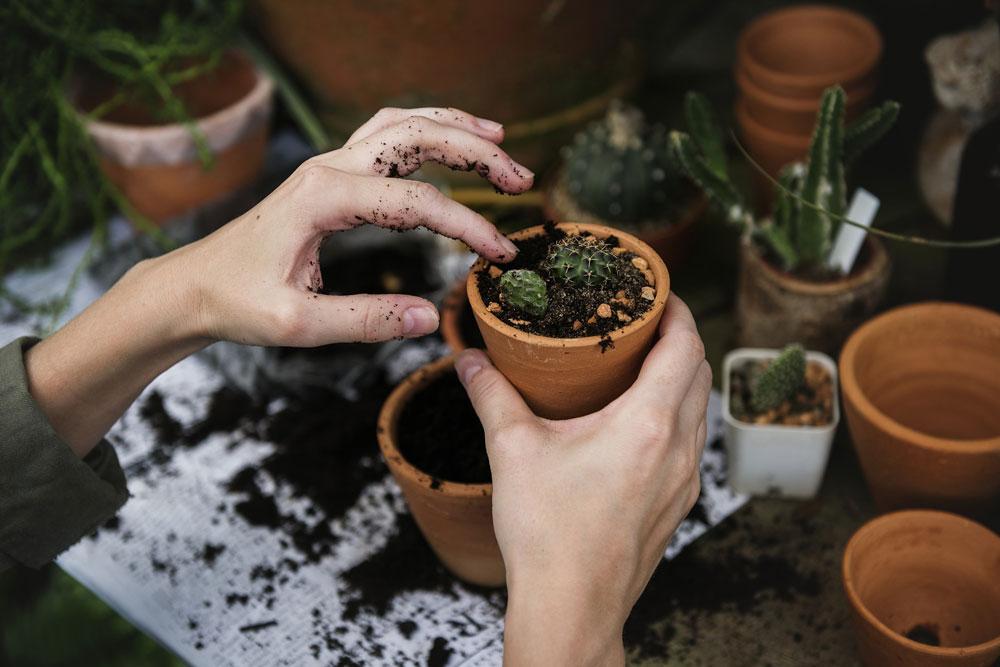 Gardening trends of 2019